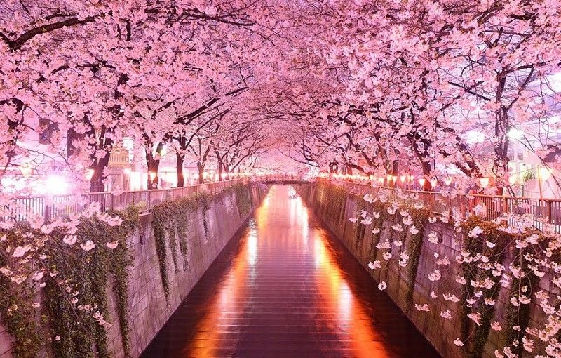 The Most Amazing Pictures From All Over The World Cherry Blossom Japan Tree Tunnel Beautiful Tree