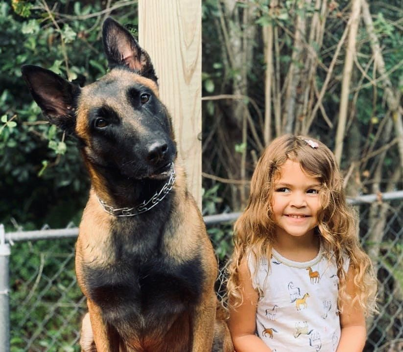 When shopping for a family protection dog here's what to steer away from. • 🐕 Sport titles: many people will tell you a dog is titled in Schutzhund this or IPO that. Sport dogs are trained to memorize and run a course in a field then bite the decoy at the end.   #workingdog #dogsofinstagram #k9 #dog #germanshepherd #gsd #dogs #dogtraining #servicedog #workingdogsofinstagram #belgianmalinois #malinois #workingdogsofig #protectiondog #protectiondogs #policek9 #maligator #gsdofinstagram