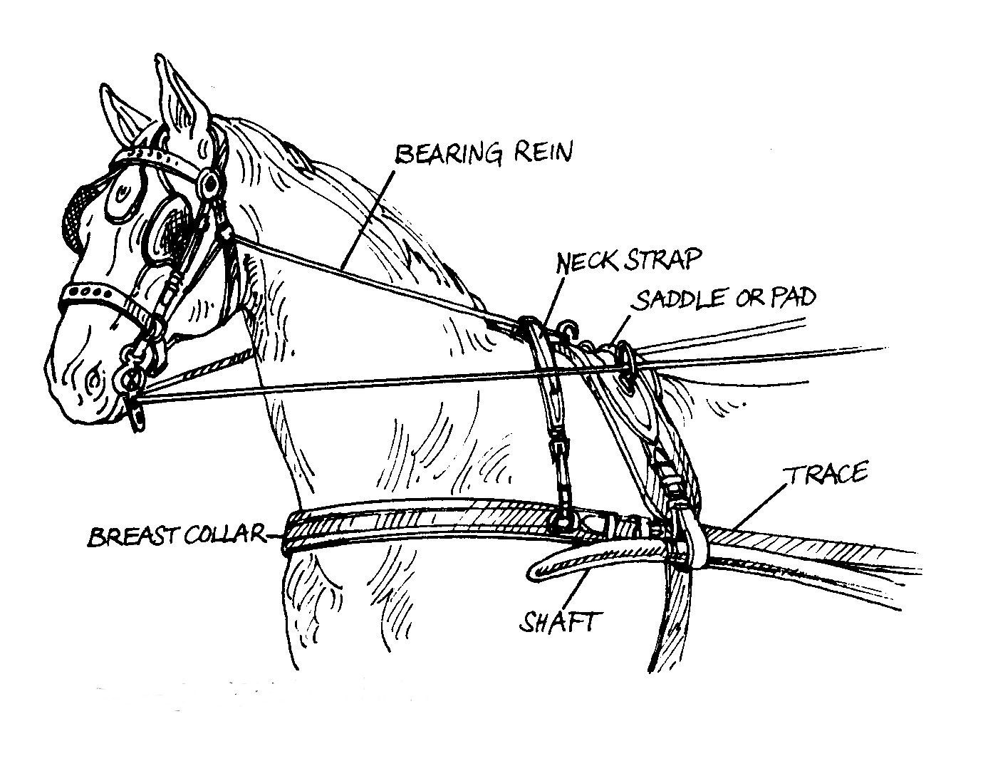Pin On Horse And Other Equine References