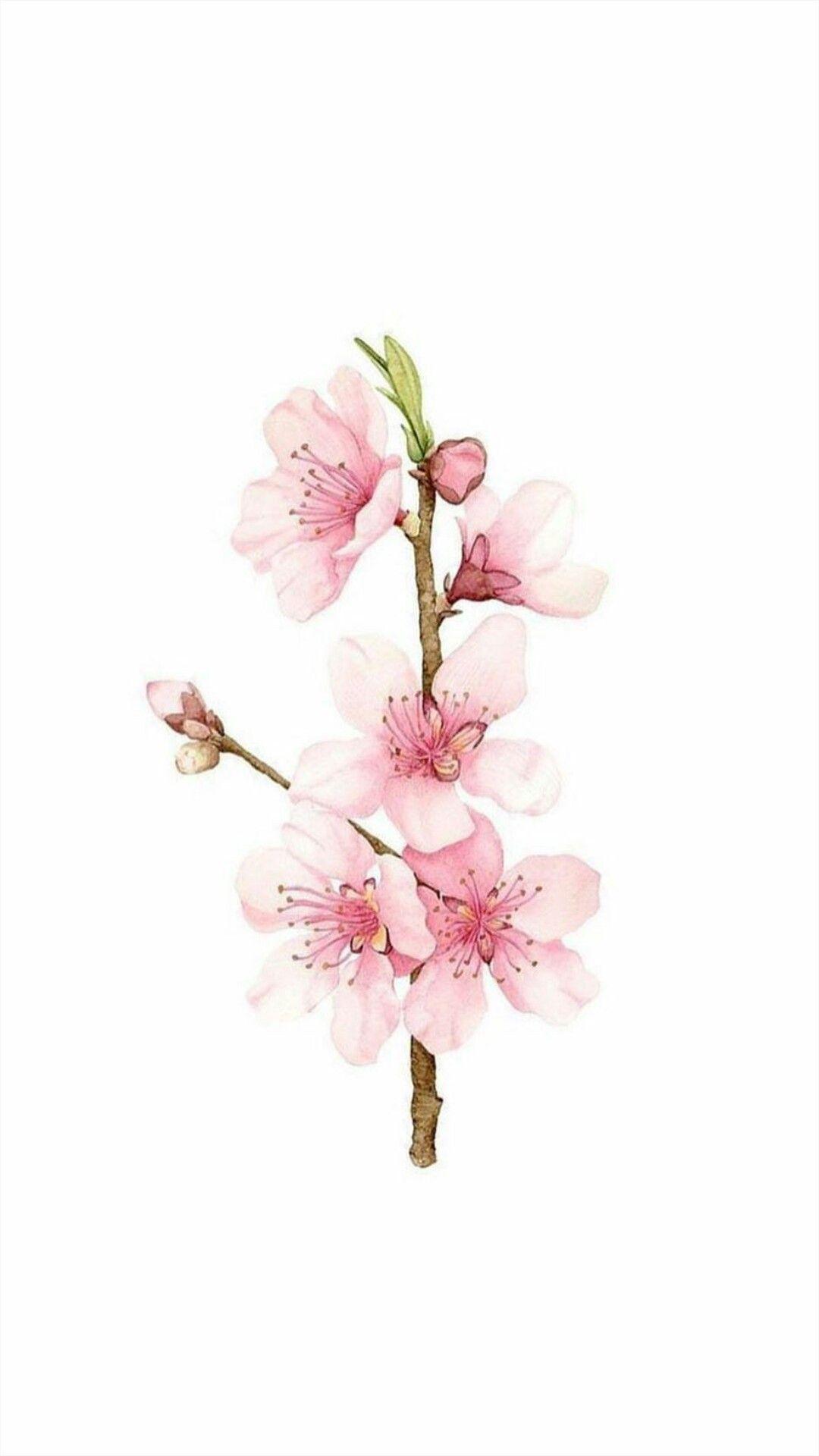 Epingle Par Joseph Tlb Sur Dessin Tatouage Cerisier Aquarelle