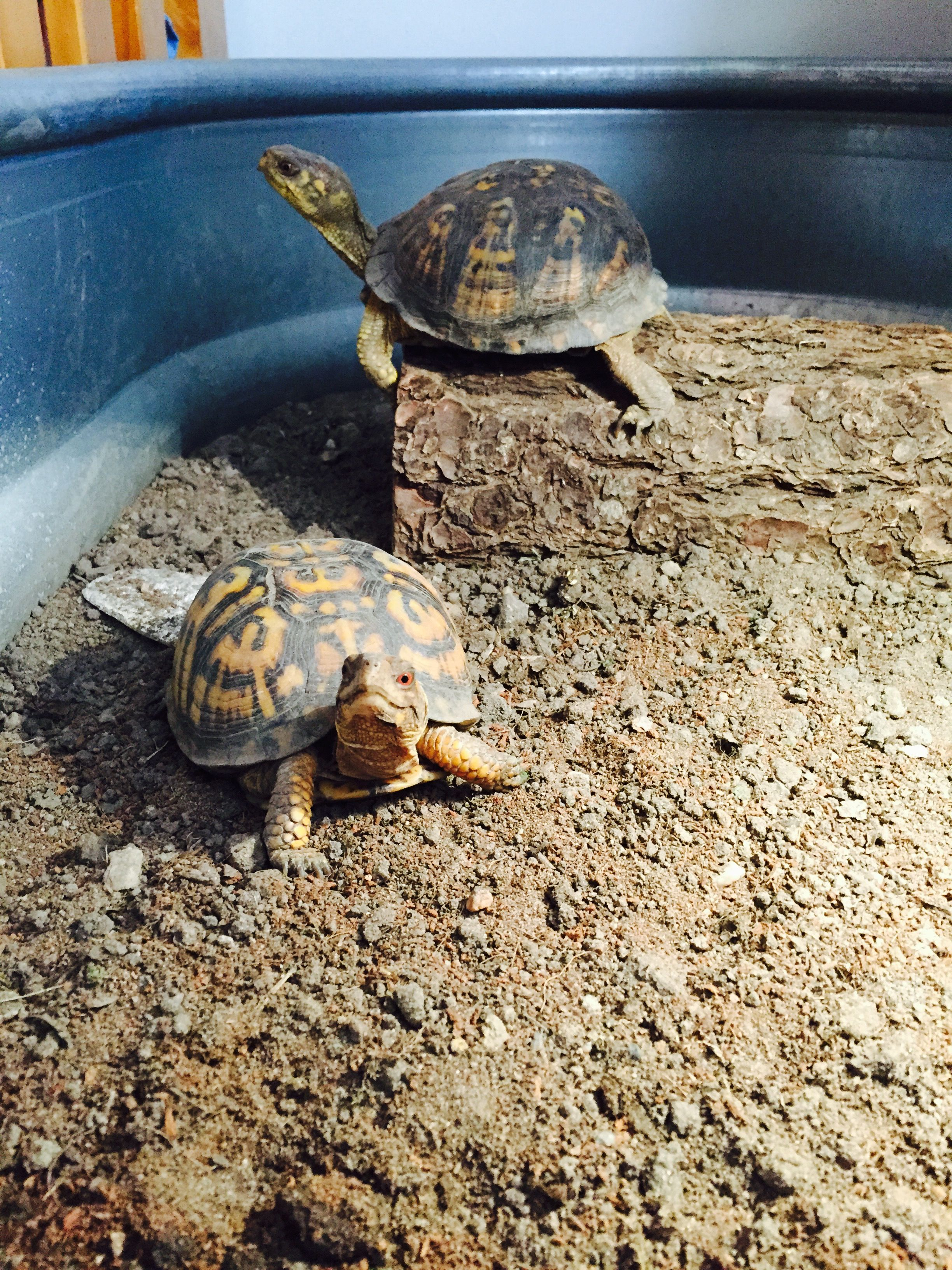 Pin by Victoria 🌟 on little rock | Pet turtle, Small pets ...