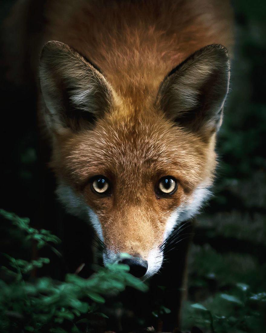 Animal Photography Animal photography, Funny animal