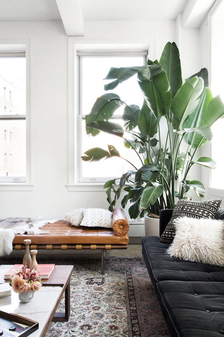 Sophisticated Yet Comfortable Living Room Plant Decor Indoor Indoor Trees Living Decor #travel #themed #living #room