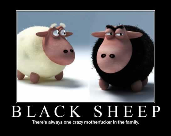 Black Sheep Funny Pictures Black Sheep Black Sheep Of The Family Sheep