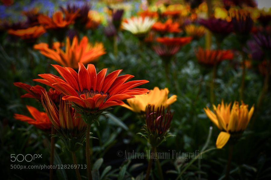 Impressionism by andreamagnani #nature
