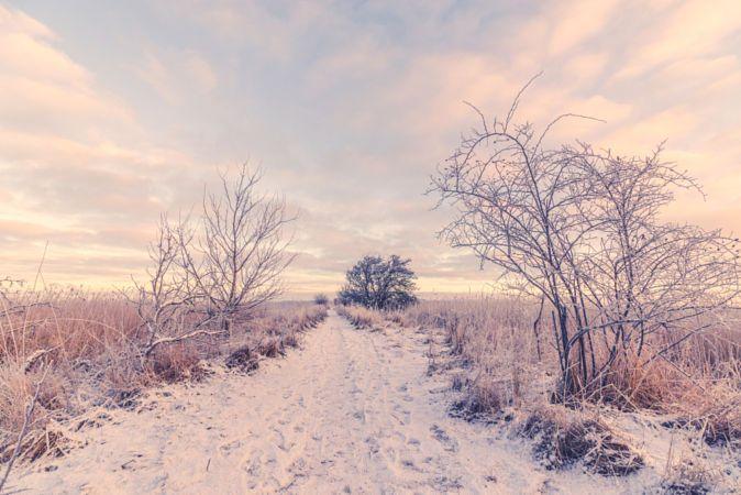 Snowy winter landscape with a path by Kasper Nymann