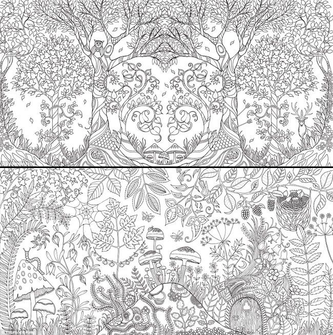 Coloriage Adulte Foret.Enchanted Forest Foret Enchantee By Johanna Basford L Her First