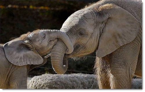Baby Animals And Mother Photos Mother Baby Elephant Frugal Cafe Blog Zone Mother And Baby Animals Elephant Cute Funny Animals