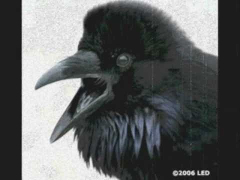 Alan Parsons Project The Raven Alan Parsons Project Alan