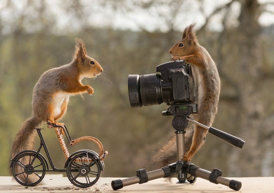 I Ve Been Shooting Wild Squirrels For 4 Years And They Finally Shot Me Back Funny Animal Pictures Funny Animal Photos Animals Wild