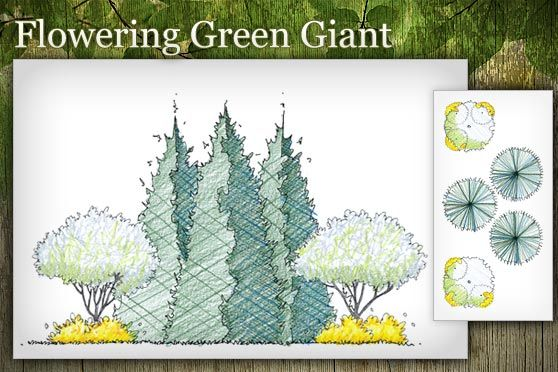 Free Landscape Design Plans Free Landscape Design Green Giant Arborvitae Contemporary Landscape Design