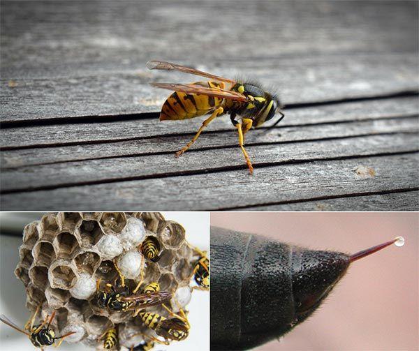b923d7f91ea9047361ea4185183fcb52 - How To Get Rid Of Wasps In A Stone Wall