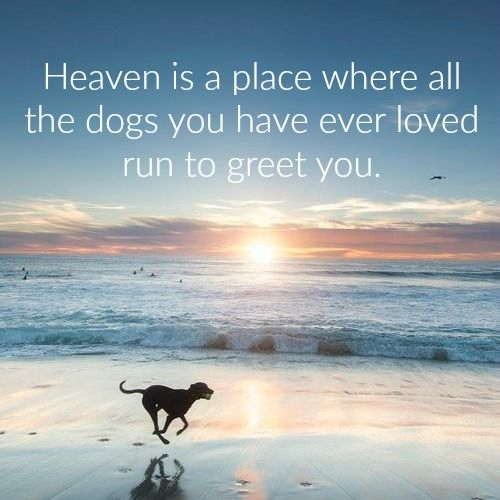 Heaven Is A Place Where All The Dogs You Have Ever Loved Run To
