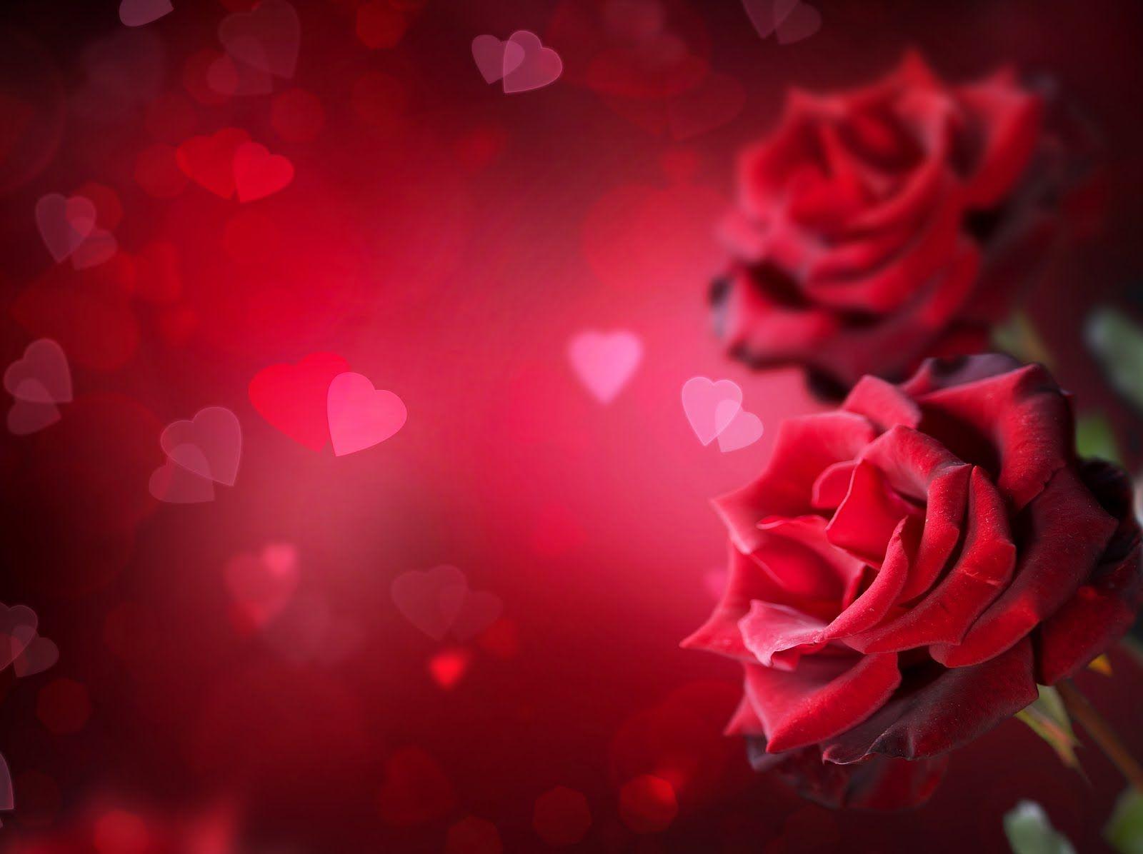 Fondo De Pantalla Dia De San Valentin Regalo Con Rosa: Imágenes Del Dia De San Valentin Con Movimiento Para