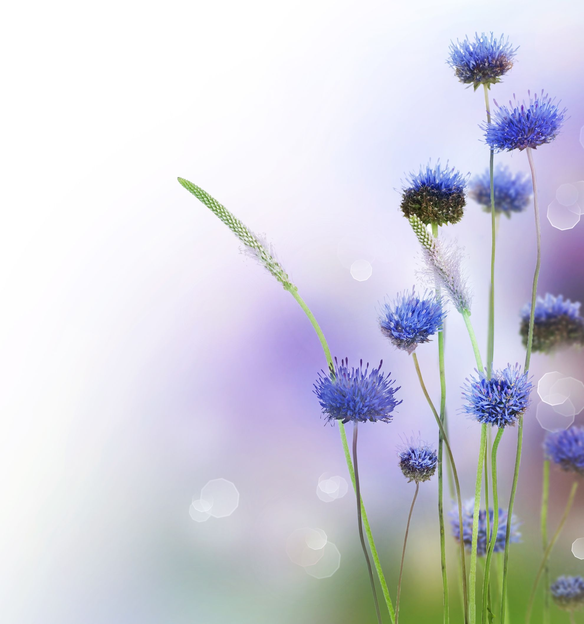 flowers wallpaper app for android