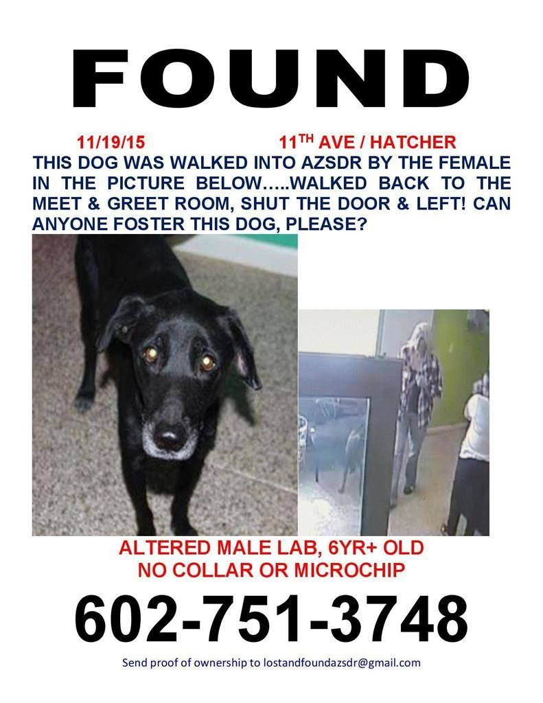 Lost Dogs Arizona Page Liked Yesterday Found Dog Unknown 11 19
