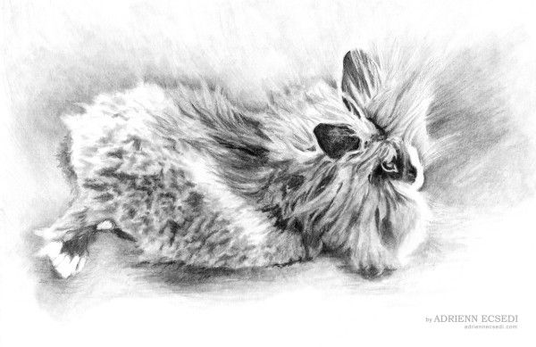 Fluffy bunny drawing by Adrienn Ecsedi  This is a new pencil drawing that shows my bunny: Fluffy. I have made this drawing as a present for my husband. Fluffy is our young male bunny, he is half a year old. He is a dwarf lionhead rabbit in black and grey and white colour. He loves to relax like this.