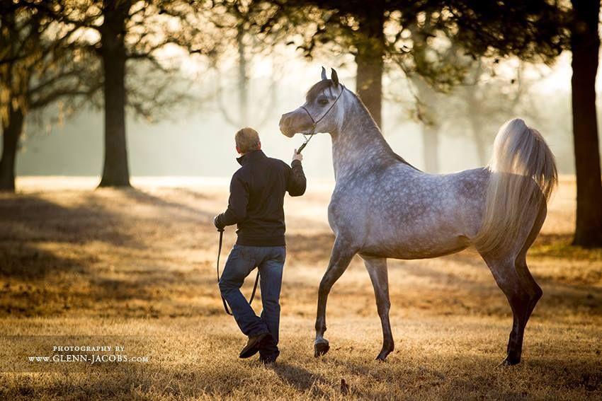 التعرف على ذكاء الخيول Horses Arabian Horse Animals