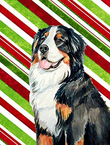 Carolines Treasures Lh9244gf Bernese Mountain Dog Candy Cane Holiday Christmas Flag Small Multicolor You Can F