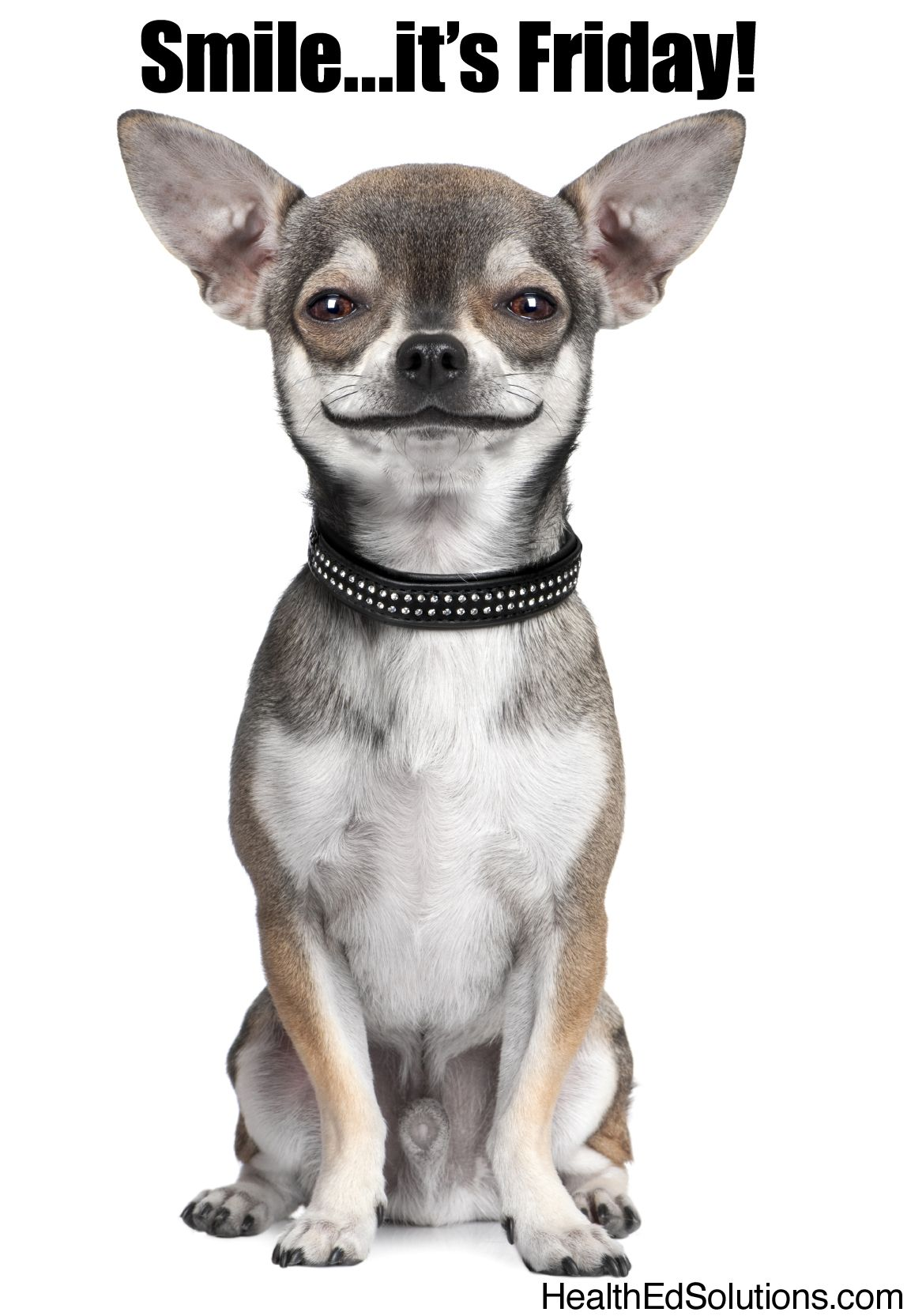 Smile...it s Friday!  smile  dogs  friday  58954e64d6e5a
