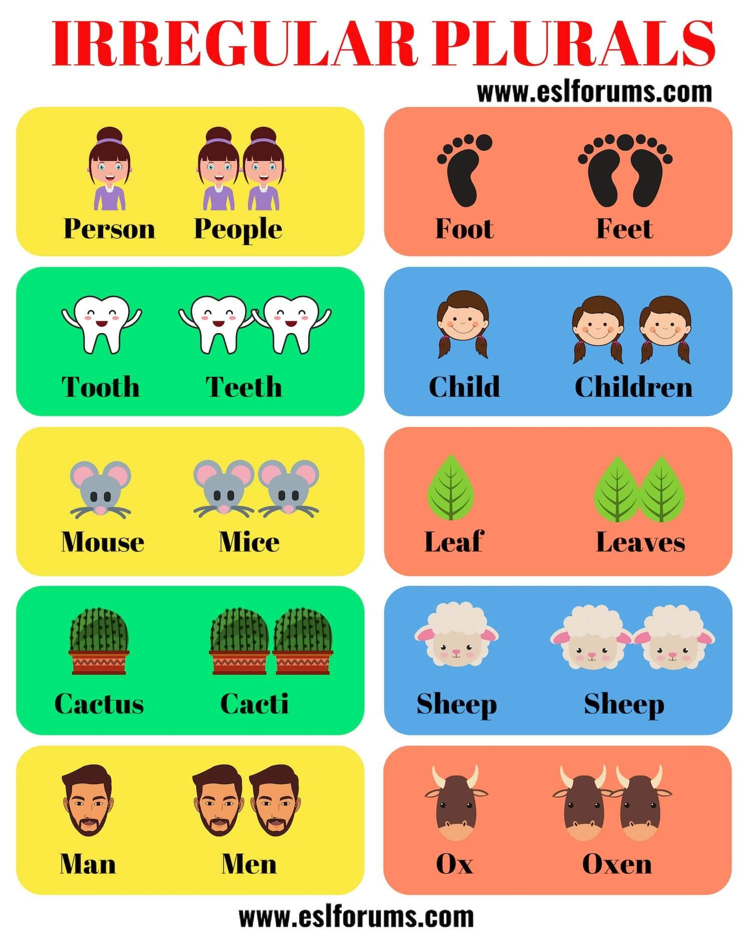 List Of 36 Useful Irregular Plural Nouns In English