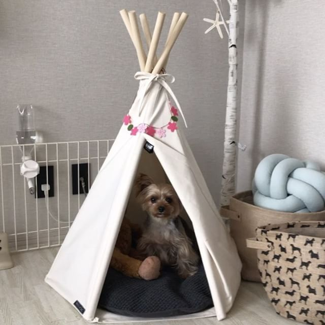 "357 Likes, 5 Comments - Ruby (@ruby_the_yorkie) on Instagram: "". Monkichi occupy tipi tent ⛺️  ルビたん今日はティピーテントでかくれんぼ⛺️ ---------------- #朝からルビたんと遊んでいたよ…"""