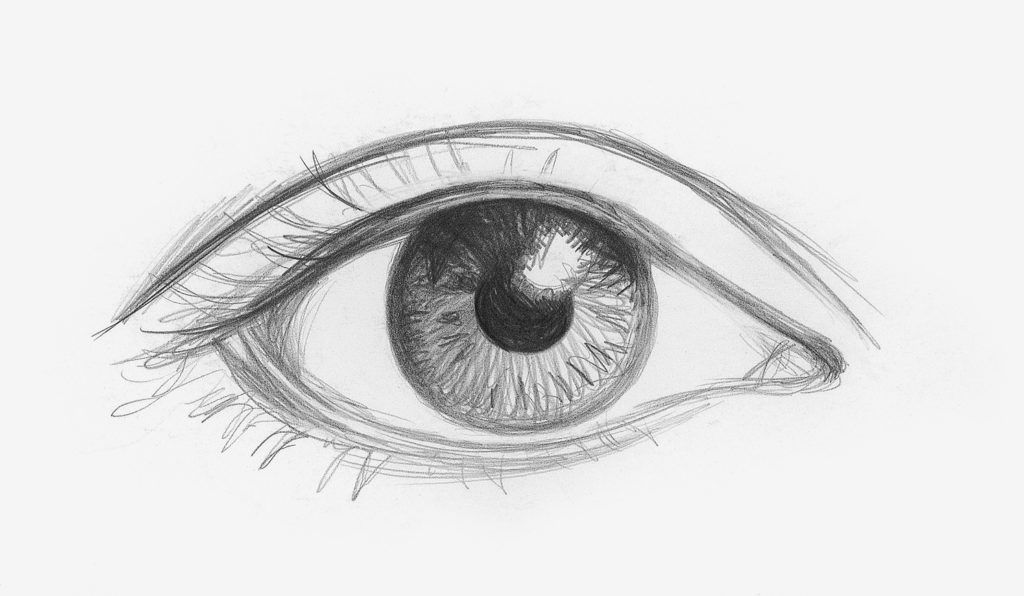 How To Draw Human Eye Diagram For Beginners Manual Guide