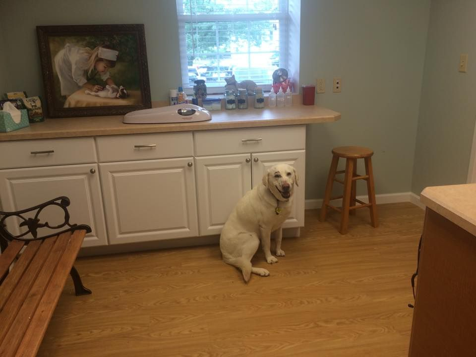 Dog Friendly Room Lab Pet Clinic Dog Friends Animal Hospital