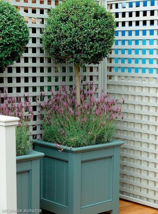 Rosliny Na Sloneczny Poludniowy Balkon Hampton Garden Indoor Garden Beautiful Gardens