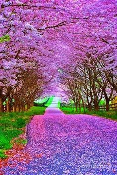 Spring Landscapes Beautiful Nature Beautiful Landscapes Nature Photography