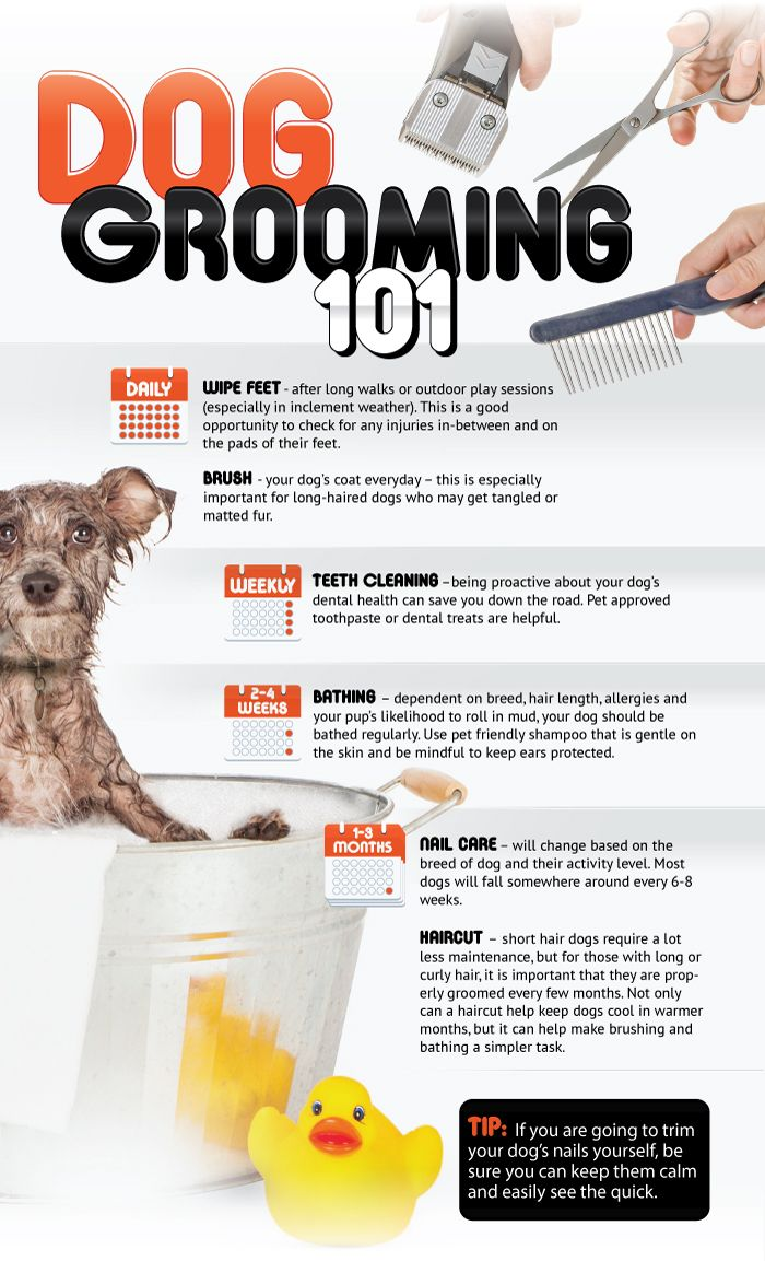 Dog Grooming 101 Pet Insurance Reviews Embrace Pet Insurance Pet Clinic