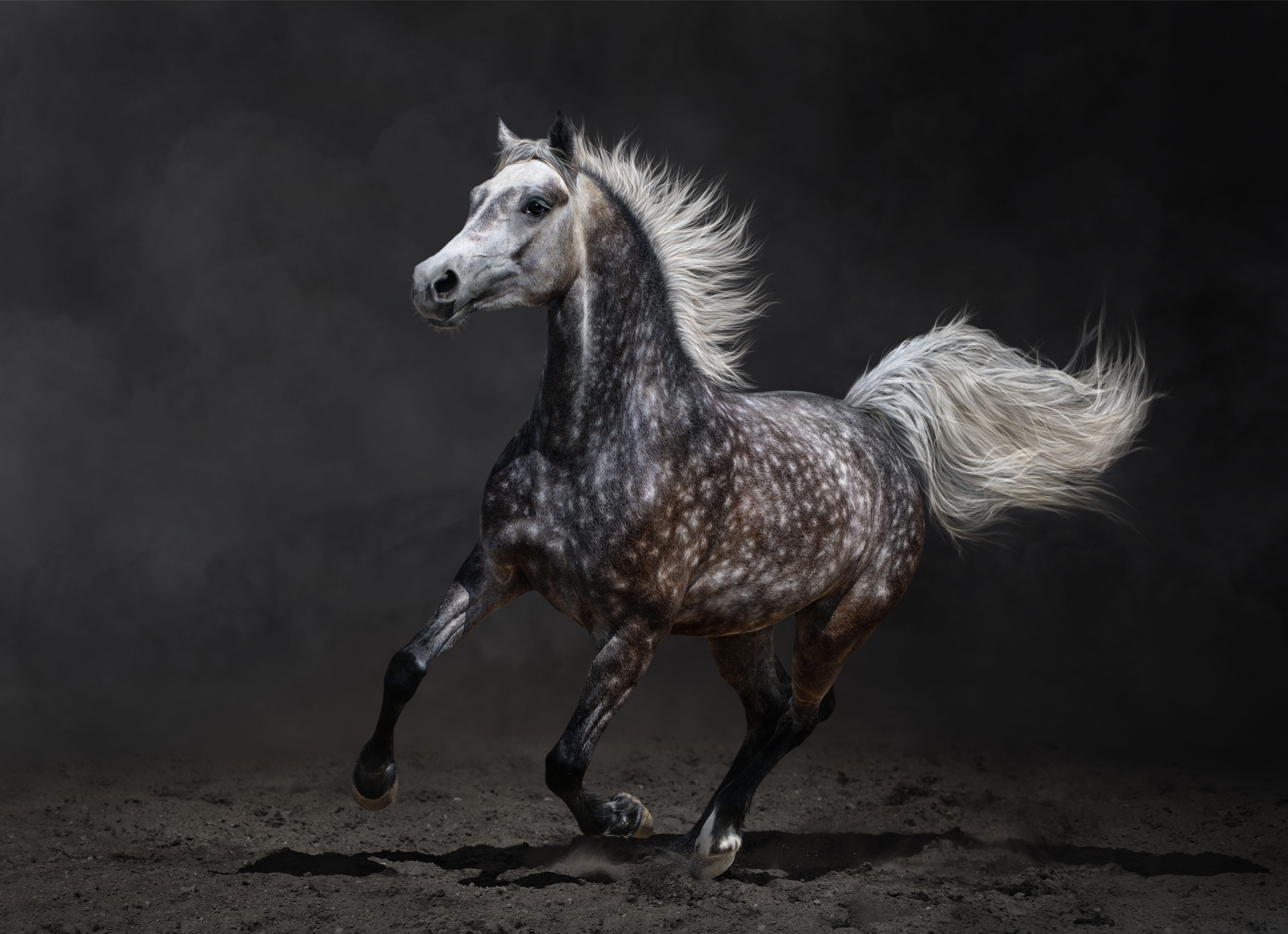 Beautiful Photography Arabian Horse Fonds D Ecran Cheval Courir Animaux Telecharger Photo Photographie Equestre Animaux Fond Ecran Cheval