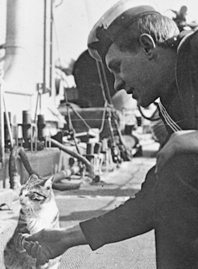 16 ภาพแมว สหายร วมรบช วงสงครามโลกคร งท 1 Nation Tv ประว ต ศาสตร ข าว