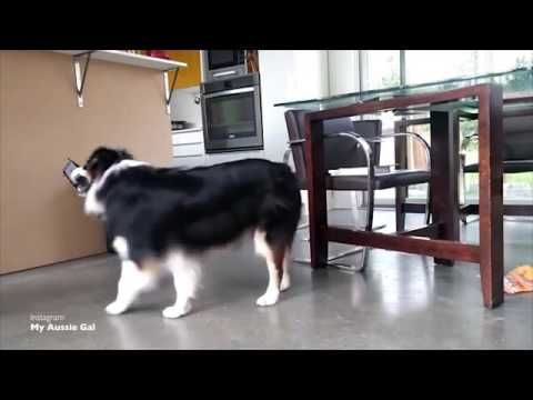 Very clever dog helps clean around the house