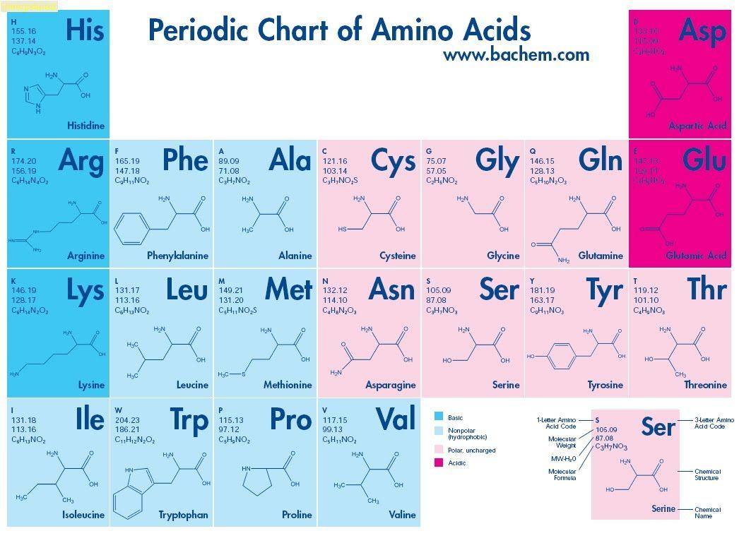 Amino Acids Chart Google Search Farmaceutico Digital Pinterest