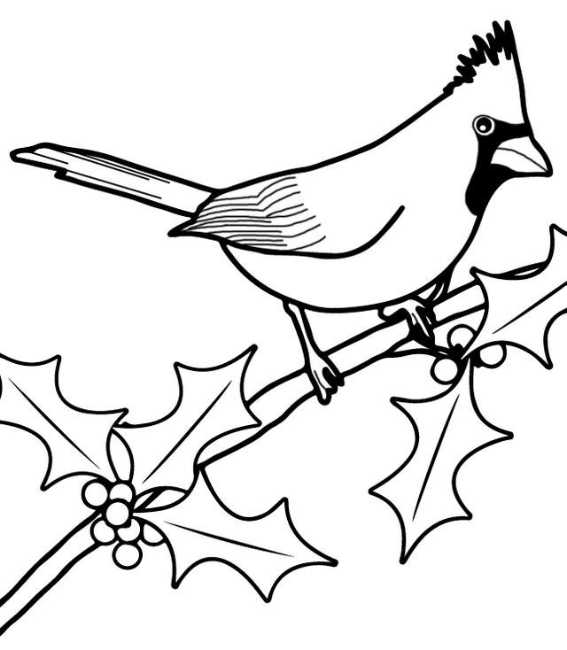 Cardinal Bird Coloring And Drawing Page Bird Coloring Pages Zoo Coloring Pages Coloring Pages
