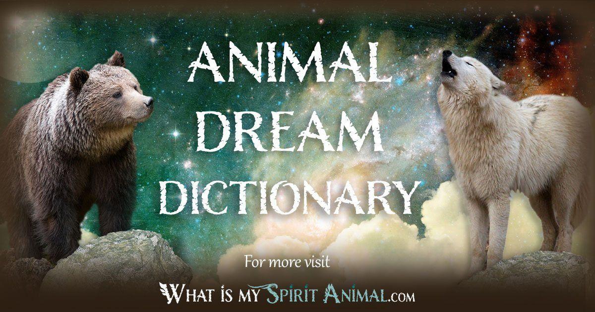 Animal Dream Dictionary Animal Dream Symbols Meanings Power