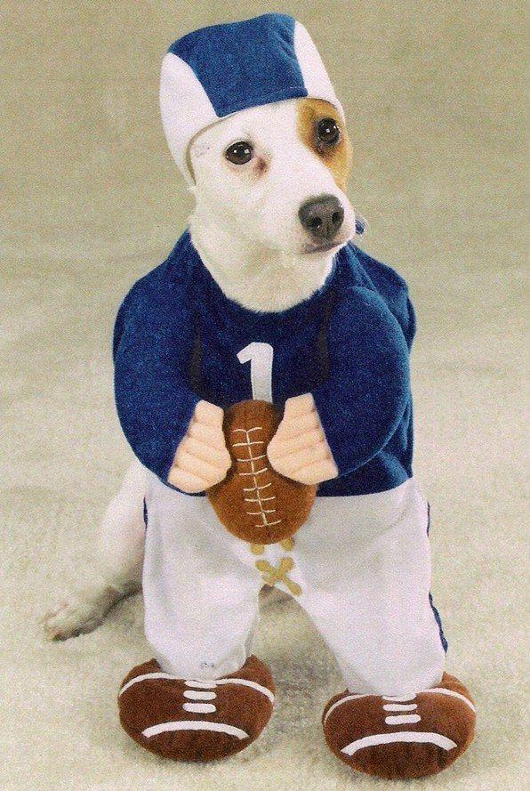 50 Disfraces caseros para mascotas (con imágenes