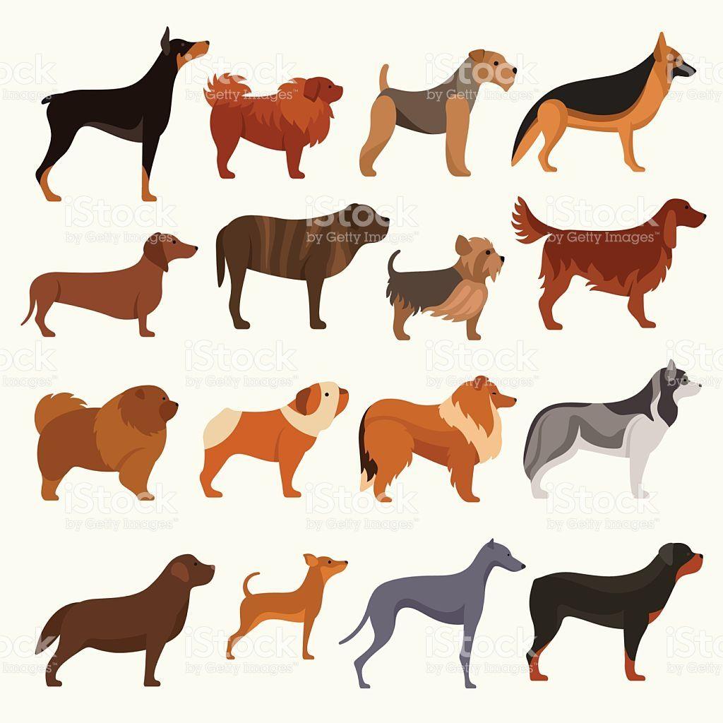 Dog Breeds Vector Illustration 犬ポスター 犬のアート イラスト