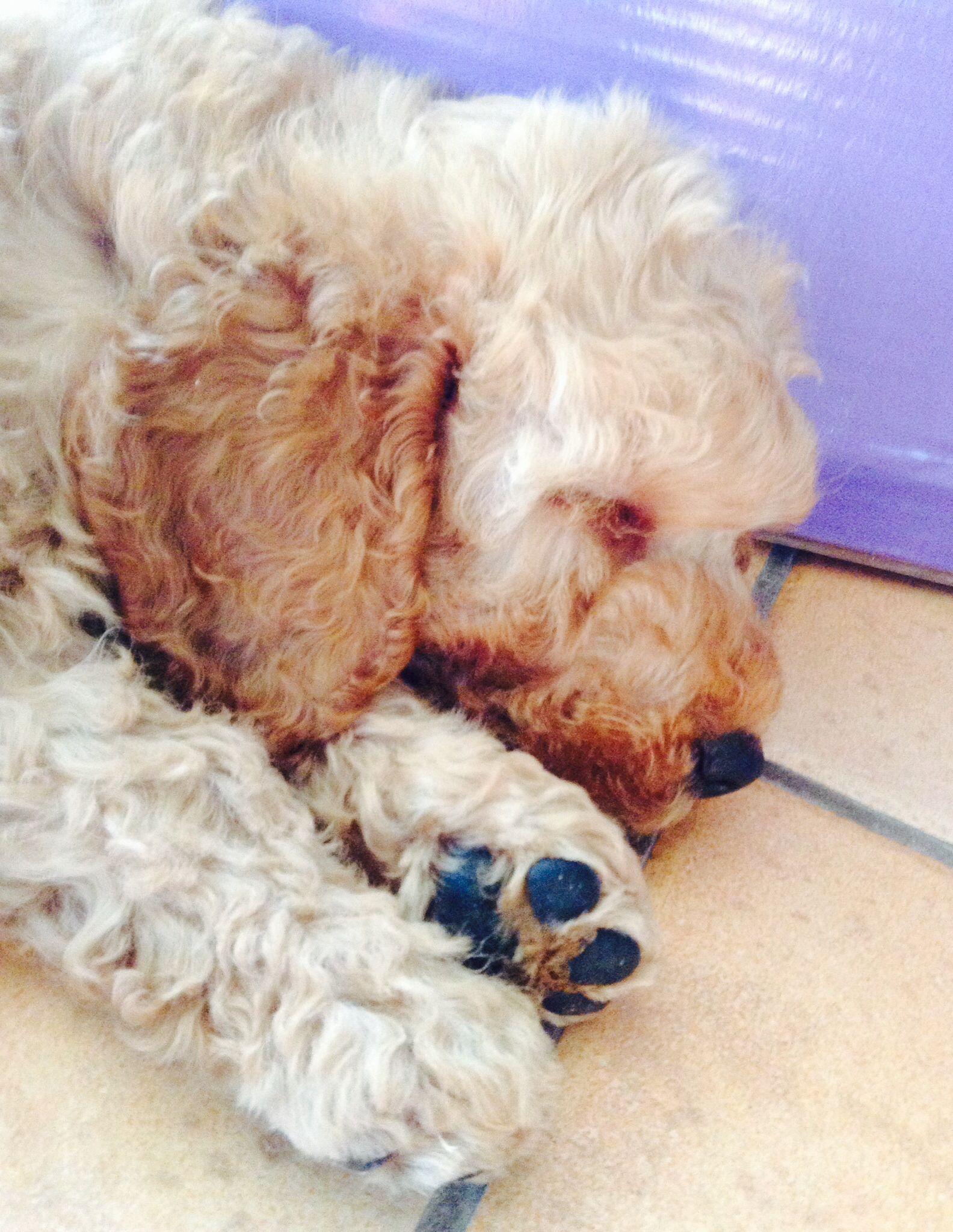 Rupert sleeping puppies and kittens pinterest