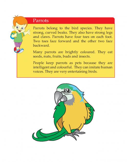 3rd Grade Descriptive Essay Parrots Sample First Grade Reading Comprehension Reading Comprehension Lessons English Writing Skills
