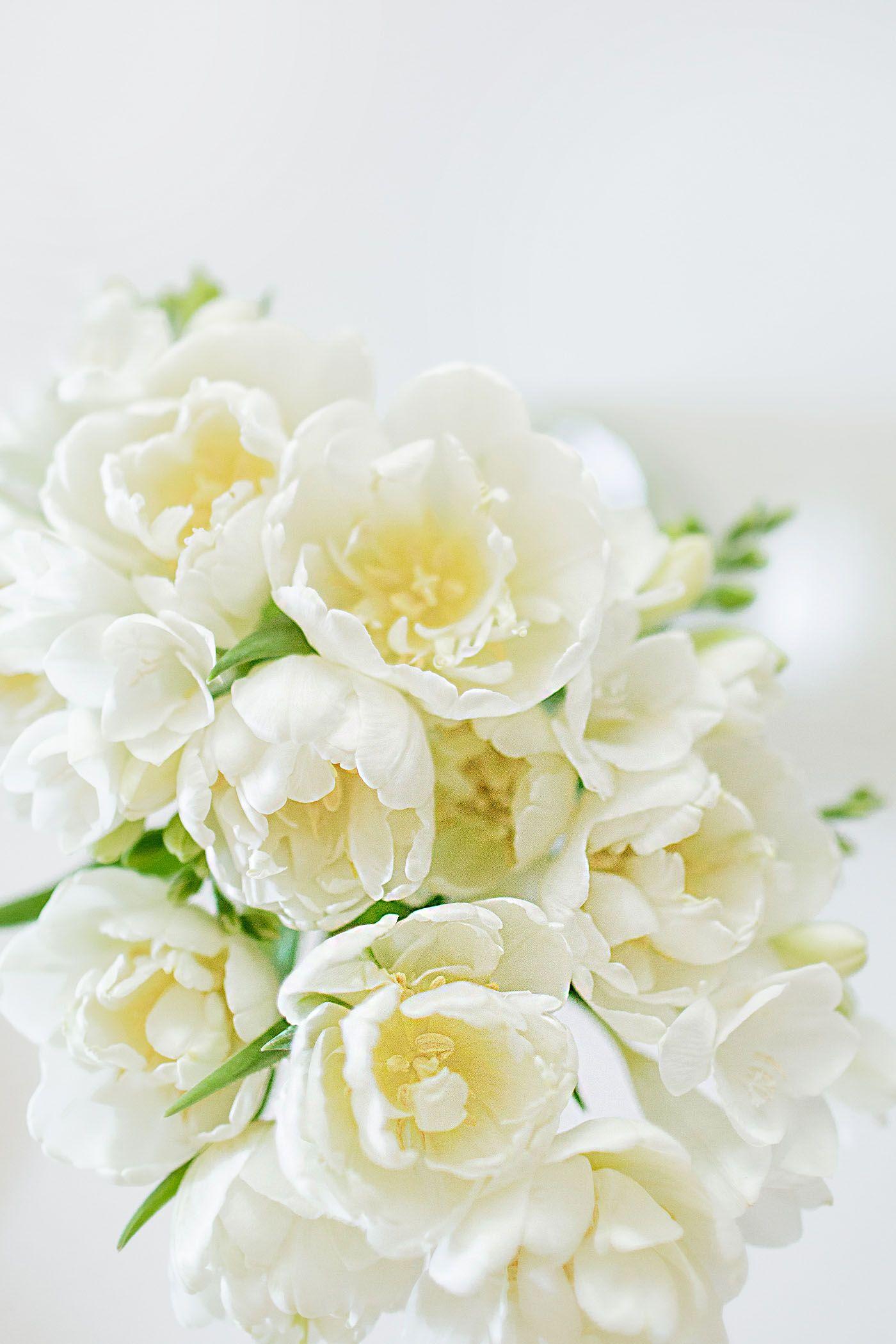 White Freesia Flowers Life Floral Garden Pinterest Freesia