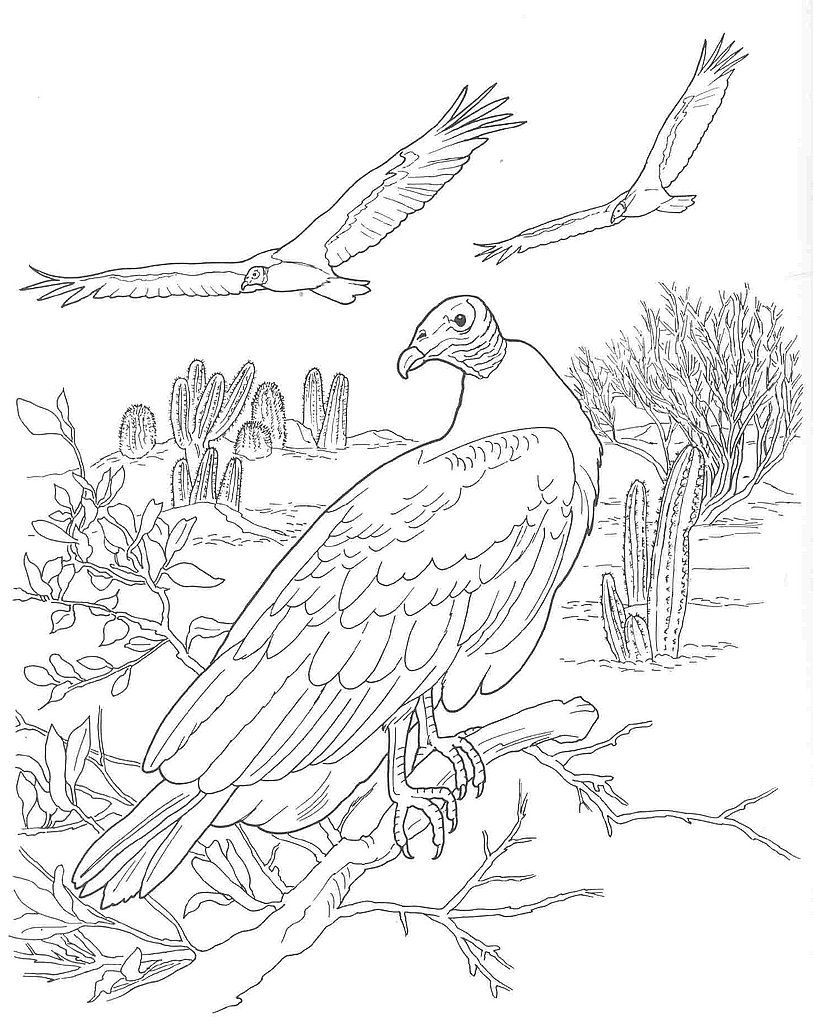 Desert Scene Coloring Pages