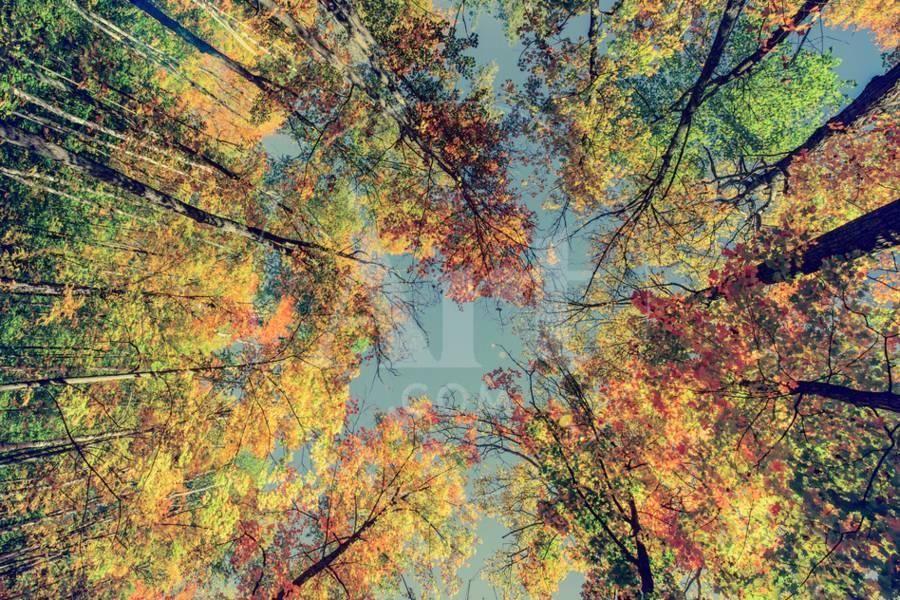 'Autumn Tree Leaves - Instagram' Photographic Print - SHS Photography | Art.com