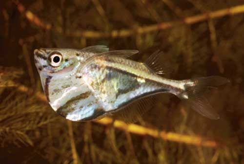 Why Do Fish Jump Out Of Water Certain Tropical Fishes Are Known