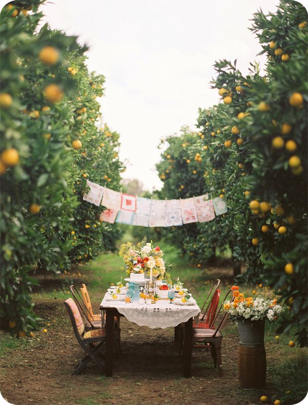 perfect wedding: i love this idea for a wedding, very casual in an orange orchard, the styling of using vintage things for decorations!  just lovely!