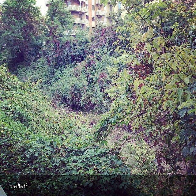 #Torino raccontata dai cittadini per #InTO Foto di @elleti giorno 5 #InTO quando la natura prevale sull'incuria: trincerone Sempione Gottardo