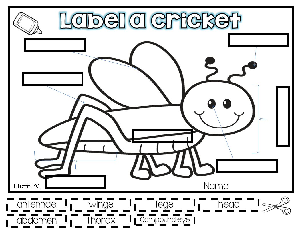 Short Term Objective Vocab Define Each Part Of The Cricket S Body Parts And Then Label The
