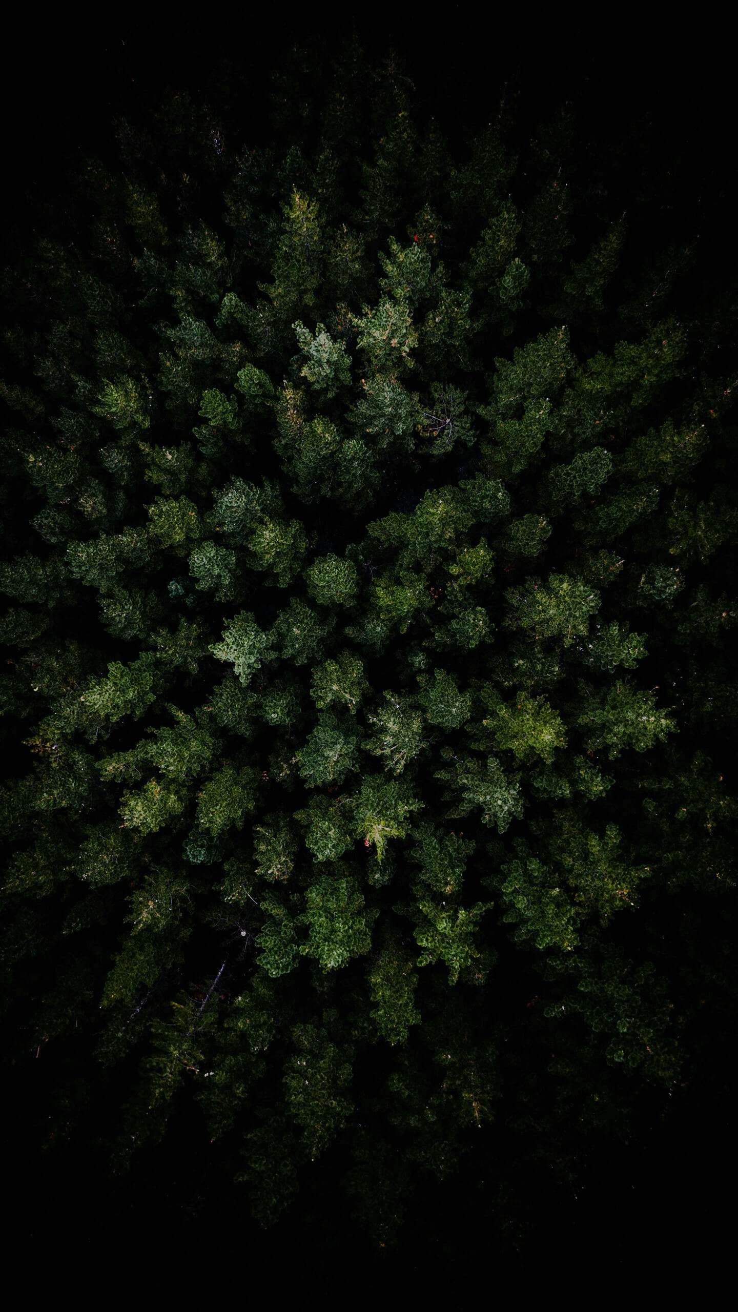 Dark Forest Aerial View Iphone Wallpaper Backgrounds In 2019