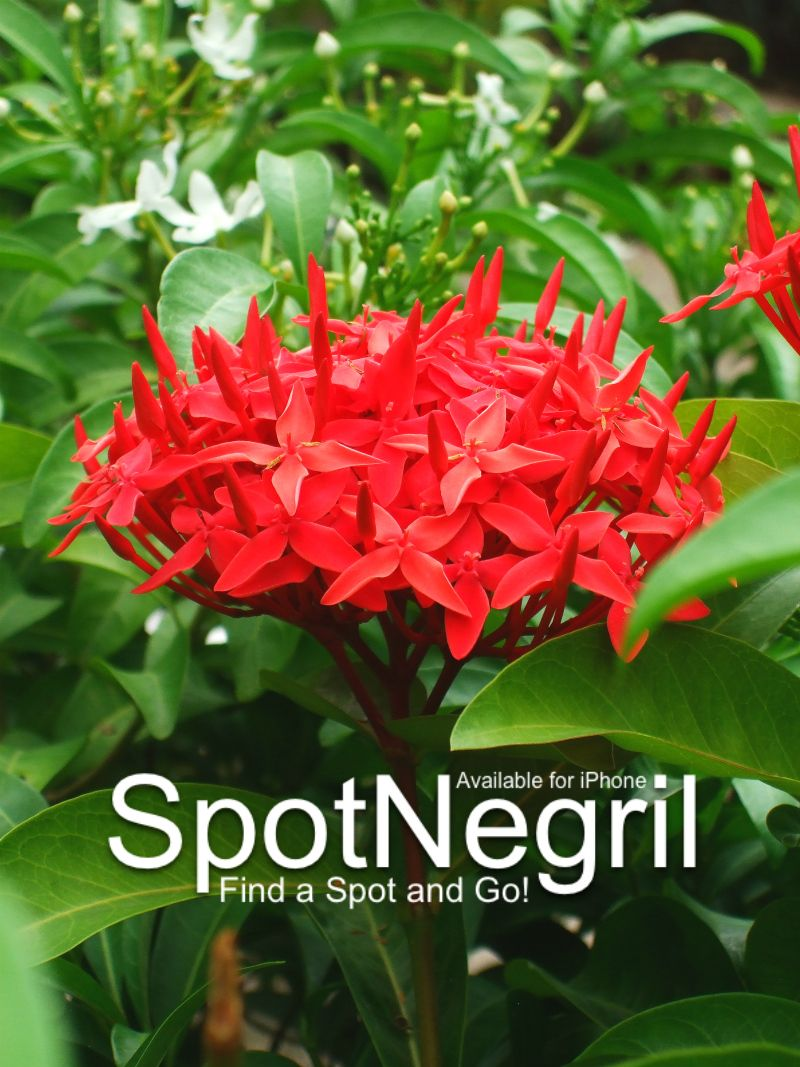 On your way to Negril, Jamaica? SpotNegril can help